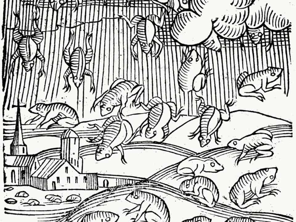 Illustration showing frogs raining from sky